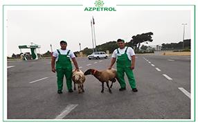 """Sacrifice Holiday at """"Azpetrol"""" Company"""